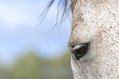Het oog van het paard Stock Foto