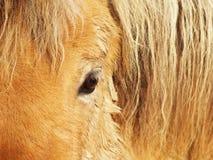Het oog van het paard, detail, close-up 1 Stock Fotografie