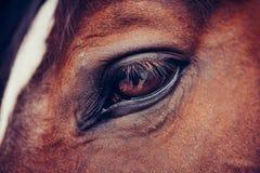 Het oog van het paard `s royalty-vrije stock foto