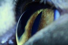 Het oog van katten Stock Afbeelding