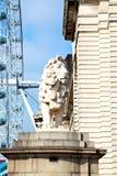 het oog van leeuwlonden binnen Stock Afbeeldingen