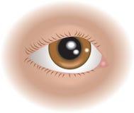Het oog van lichaamsdelen Stock Afbeelding