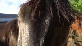 Het oog van het paard stock video