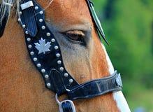 Het oog van paarden met teugel Royalty-vrije Stock Afbeeldingen