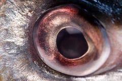 Het oog van vissen Stock Foto's