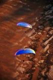 Het oogmening van de Paramotorvogel Royalty-vrije Stock Afbeeldingen