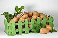 Het oogsten Beeld van rijpe aardappels in groene doos royalty-vrije stock afbeeldingen