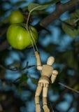 Het oogsten bij de appelboom Royalty-vrije Stock Afbeeldingen