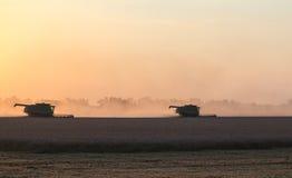 Het oogsten bij zonsondergang Stock Foto's