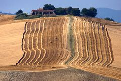 het oogsten in Calvignano Italië Stock Foto