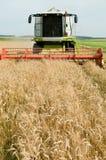 Het oogsten combineert in de tarwe Stock Foto