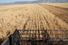 Het oogsten combineert in de tarwe Royalty-vrije Stock Afbeeldingen