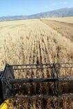 Het oogsten combineert in de tarwe Stock Foto's