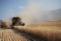 Het oogsten combineert in de tarwe Royalty-vrije Stock Fotografie