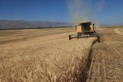 Het oogsten combineert in de tarwe Royalty-vrije Stock Afbeelding