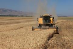 Het oogsten combineert in de tarwe Royalty-vrije Stock Foto's