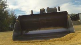 Het oogsten Graan verzamelde tractor De camera gaat de emmer met de korrel in stock video