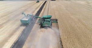 Het oogsten langs combineert, tarwe het oogsten stock video