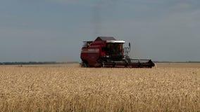 Het oogsten machine op de gebieden stock footage