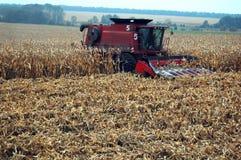 Het oogsten mais Stock Afbeelding