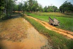 Het oogsten op een rijstaanplanting Stock Afbeelding