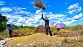 Het oogsten seizoen van landbouwers stock afbeelding