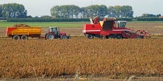 Het oogsten van aardappels met machines op het gebied royalty-vrije stock afbeelding