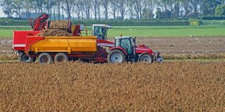 Het oogsten van aardappels met machines op het gebied stock afbeelding