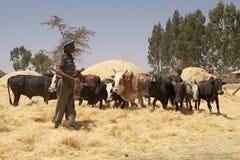 Het oogsten van Afrika Royalty-vrije Stock Afbeeldingen