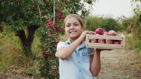 Het oogsten van appelen in de boomgaard stock video