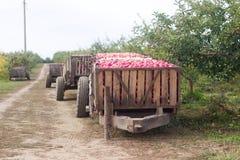 Het oogsten van appelen in de boomgaard Containers met appelen Rustieke Stijl, Selectieve Nadruk royalty-vrije stock afbeeldingen