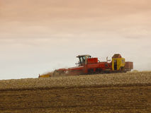 Het oogsten van de aardappel Stock Afbeelding