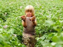Het oogsten van de aardappel Royalty-vrije Stock Foto