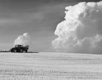 Het oogsten van de tarwe in de zomer Stock Foto