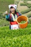 Het oogsten van de vrouw theeblaadjes Stock Foto