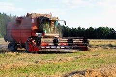 Het oogsten van de zomer Stock Fotografie