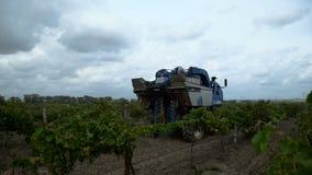 Het oogsten van Druiven in de Wijngaarden van de Krim stock footage
