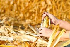 Het oogsten van een graan Stock Foto's