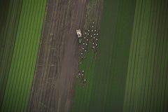 Het oogsten van Gewassen van de Antenne van het Gebied Stock Afbeelding