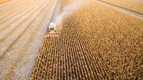 Het oogsten van graan stock foto