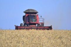 Het oogsten van graangewassen op de gebieden van BrazilianStock Fotografie