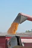 Het oogsten van het graan Stock Foto's