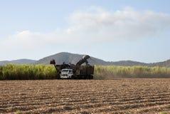 Het oogsten van het suikerriet Stock Foto's
