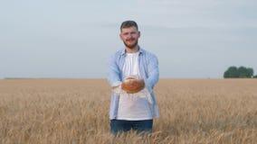 Het oogsten van jonge agronoom, gelukkige mens geeft u bakte vers brood en glimlachen bij camera die zich in gerijpte korrel bevi stock videobeelden