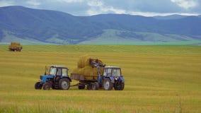 Het oogsten van landbouwmachines De tractor laadt balen van hooi op de machine na het oogsten op een tarwegebied stock footage