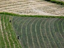 Het oogsten van Panden in Zuid-Amerika Royalty-vrije Stock Fotografie