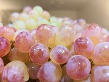 Het oogsten van rode druiven met waterdruppeltjes royalty-vrije stock afbeeldingen