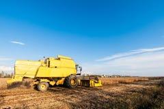 Het oogsten van sojaboongebied met maaidorser stock afbeeldingen