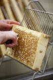 Het oogsten van verse honing van de bijenbijenkorf Royalty-vrije Stock Foto's