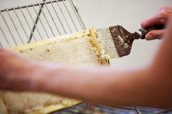 Het oogsten van verse honing van de bijenbijenkorf Royalty-vrije Stock Afbeelding